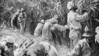 Jamaican cane cutters working on a plantation