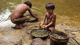 Indigenous people washing vegetables in the Amazon rainforest