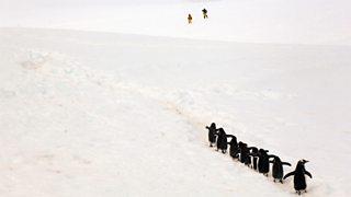 Penguins walk in the snowy landscape of Antarctica
