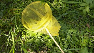 A net for catching insects