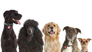 A picture of different breeds of dogs including poodle and golden retriever