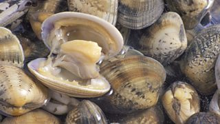 Clams in water