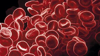 A picture of red blood cells. Each cell is circular with a dent in the centre