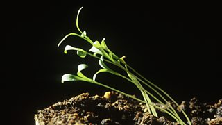 Image of a plant growing towards the light