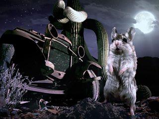 incredible mice hunt scorpions howl moon