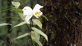 Epiphytes are flowering plants which grow on tree trunks and branches to get light