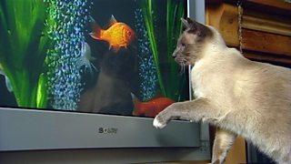 Cat a' coimhead ri iasg tro sgrion tbh