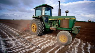 A tractor ploughing lime