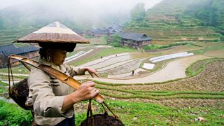 Woman working in the rice fields of Longsheng, China