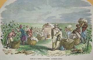 An engraving showing slaves picking cotton on a plantation in North America