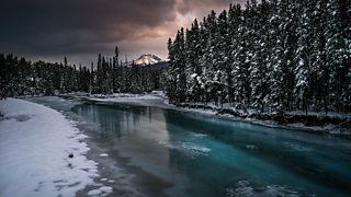 Frozen waterway in front of a forest.