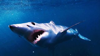 BBC One - Shark, Episode 1