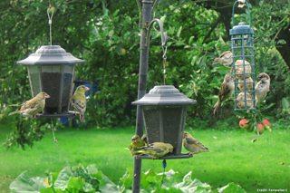 BBC Blogs - Springwatch - Where have all my garden birds gone?