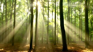 A forest in the sunlight