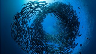 Fish swimming in a circular motion in the sea