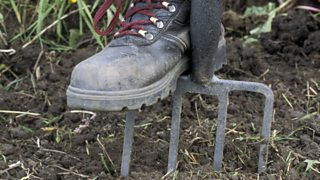 A boot on a garden fork, digging the soil