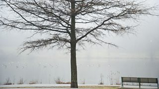 A pond in winter with a bare tree and bench