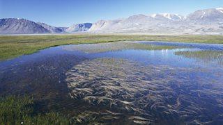 A tundra pond