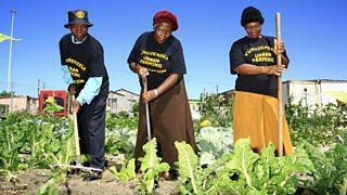 Urban farming in Cape Town.