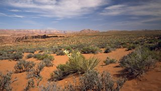 Plants growing in the Arizona desert have long taproots