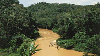 The Malaysian rainforest
