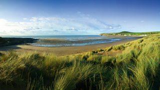 An image of a beach with Marram grass growing