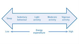 Movement And Energy Expenditure Continuum