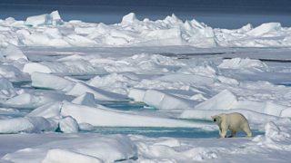 A photo of a polar bear
