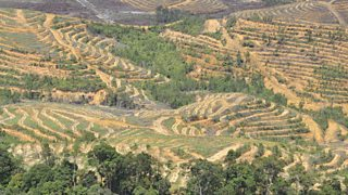 This palm oil plantation in Malaysia has been planted on land that used to be rainforest