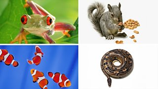 (Clockwise from top-left): Red-eyed tree frog; Grey squirrel eating nuts; Python coiled up in to a perfect circle; Shoal of clown fish.