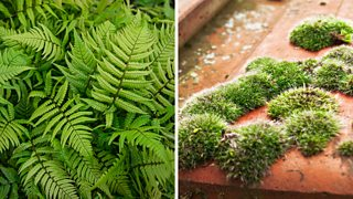 Fern and moss.