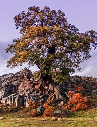 Landscape photograph of a tree growing from a rocky outcrop