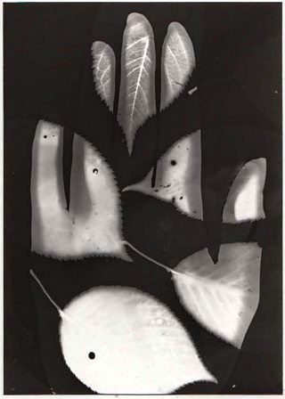 Student photogram of hand and leaves