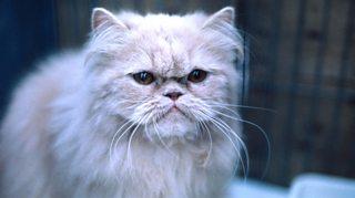 BBC Radio 4 Extra - The Meow Show, with Ed Reardon and Elgar