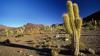 A cactus is adapted to life in a hot climate