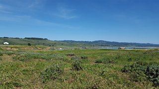 A large grassy ecosystem.