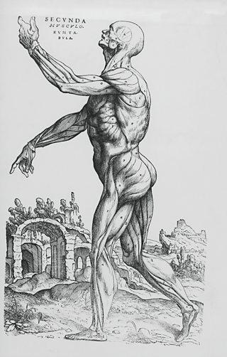 Anatomic drawing by Andreas Vesalius, 1543