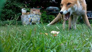 BBC Blogs - Autumnwatch - Filming Wildlife in Your Garden