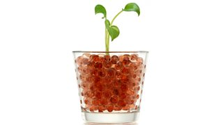 Brown hydrogel balls in a clear vase with a plant