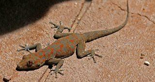 A lizard basking in the sun