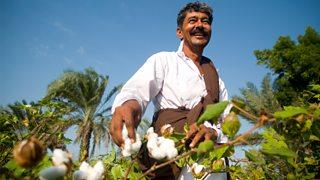 A smiling farmer harvesting cotton.