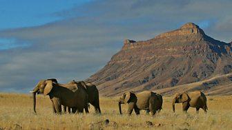 Natural World - 2007-2008: 11. Elephant Nomads Of The Namib Desert