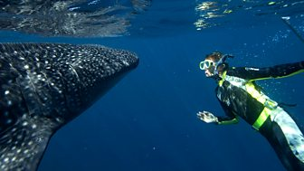 Natural World - 2008-2009: 2. Whale Shark