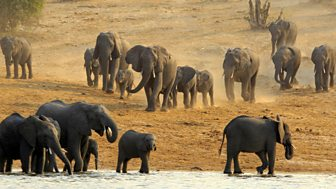 Natural World - 2008-2009: 11. Elephants Without Borders