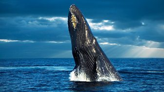 Arena - Philip Hoare's Guide To Whales: 1. Baleen