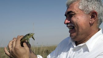Natural World - 2010-2011: 9. Miracle In The Marshes Of Iraq
