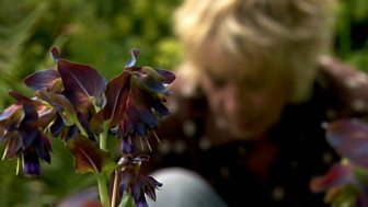 Life In A Cottage Garden With Carol Klein - Original Series: 4. High Summer