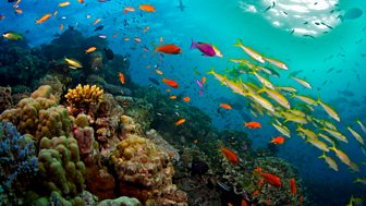 Great Barrier Reef - 1. Nature's Miracle