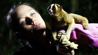 Natural World - 2011-2012: 7. Jungle Gremlins Of Java