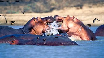 Natural World - 2011-2012: 11. Zambezi